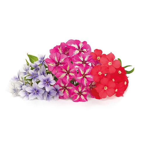 Phlox Lingots® - Flores Comestíveis