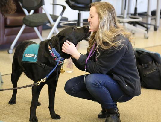 Therapy Dogs, Northwestern University, 2018