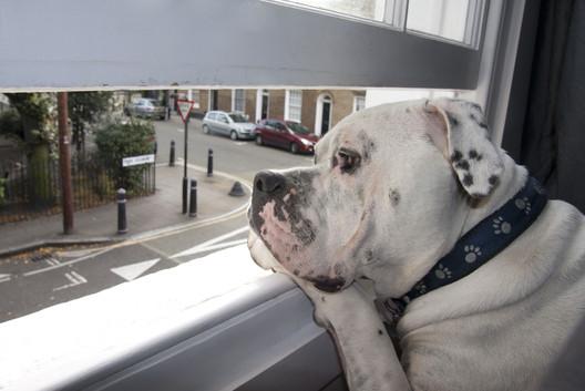 Regular Blog Feature - Dogs