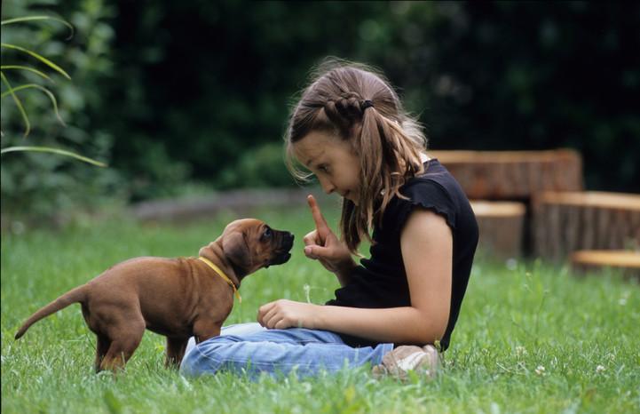 Regular Blog Feature - Puppies
