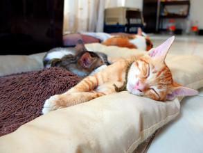 Regular Blog Feature - Kittens