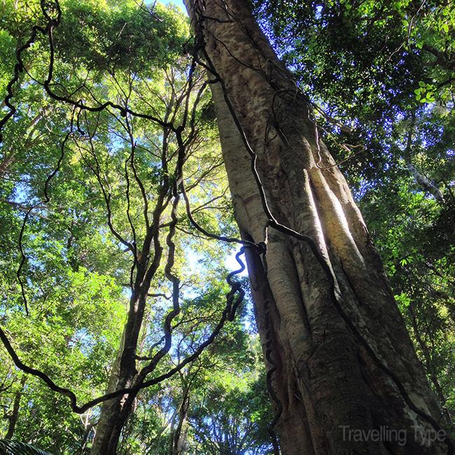 On the property's rainforest walk
