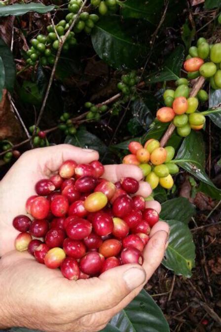 COSTA RICA Tarrazu 12 oz