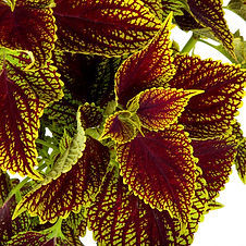 Plants (10 of 22).jpg