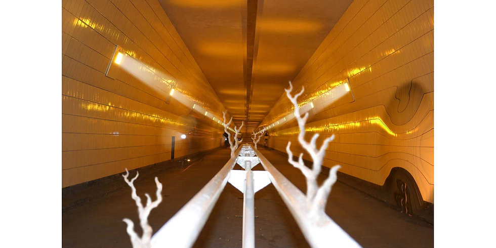 MAAS TUNNEL EVOLUTE  (2003)