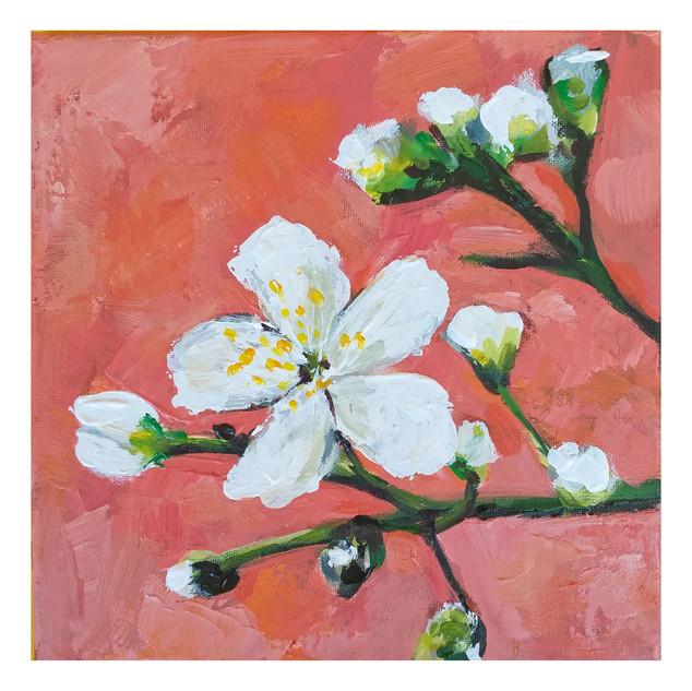 """Cherry Blossoms"""
