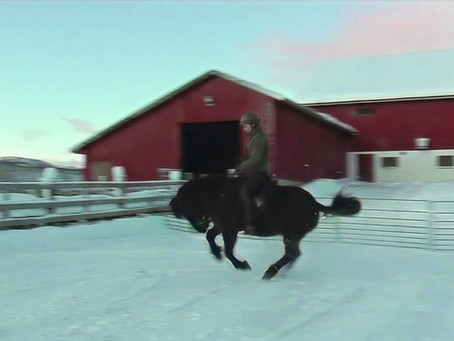 From bucking to bridleless