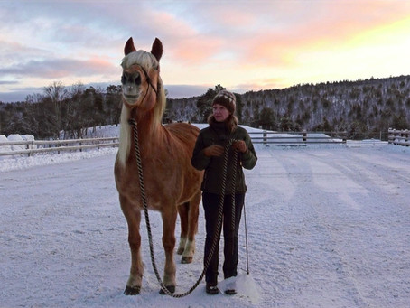 Connecting with a Norwegian Coldblooded Trotter