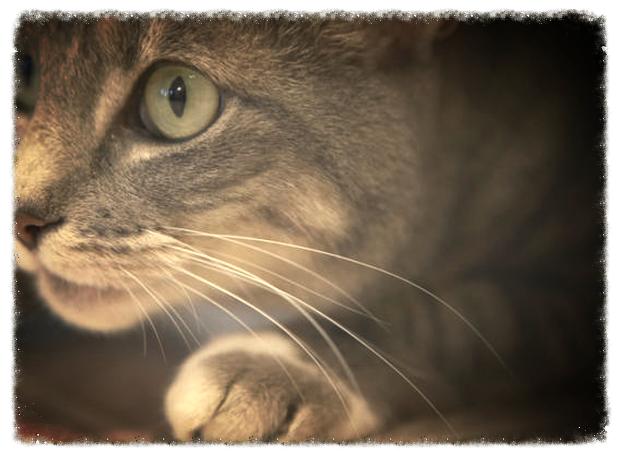 cat_edited_edited.png