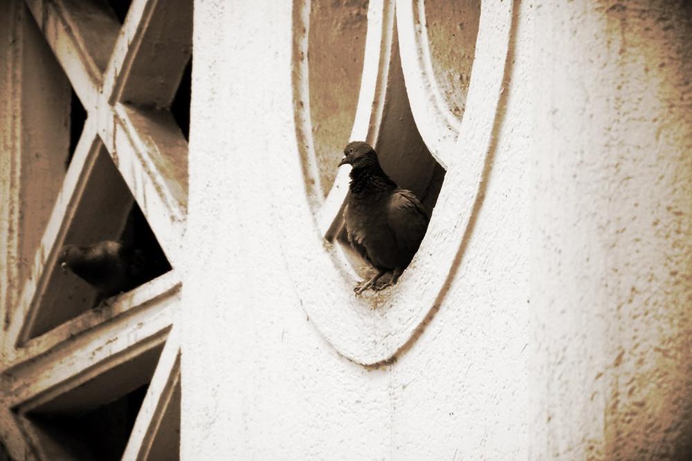 Pigeon 2014-11-7-17:22:45