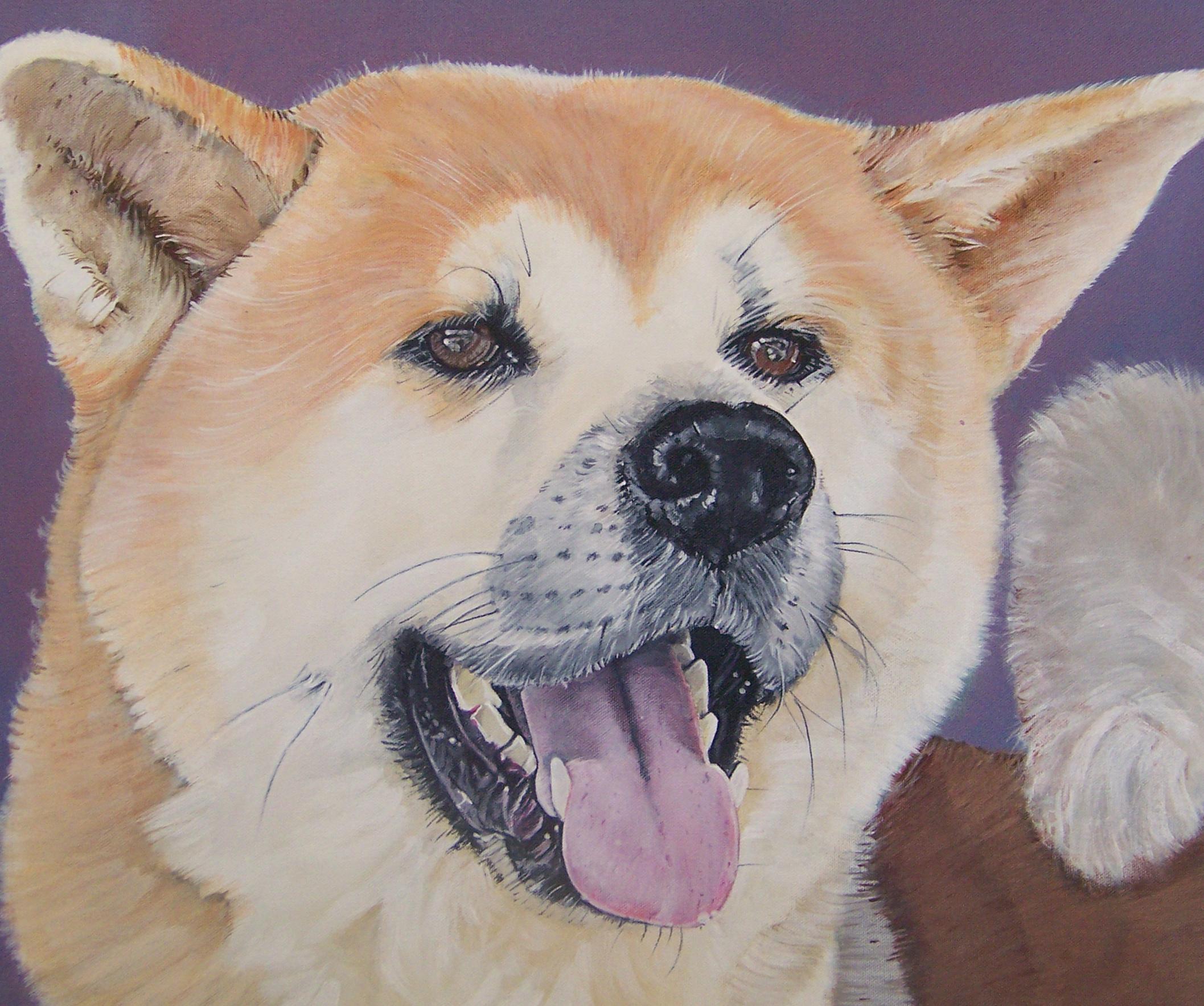 Akita dog portrait.