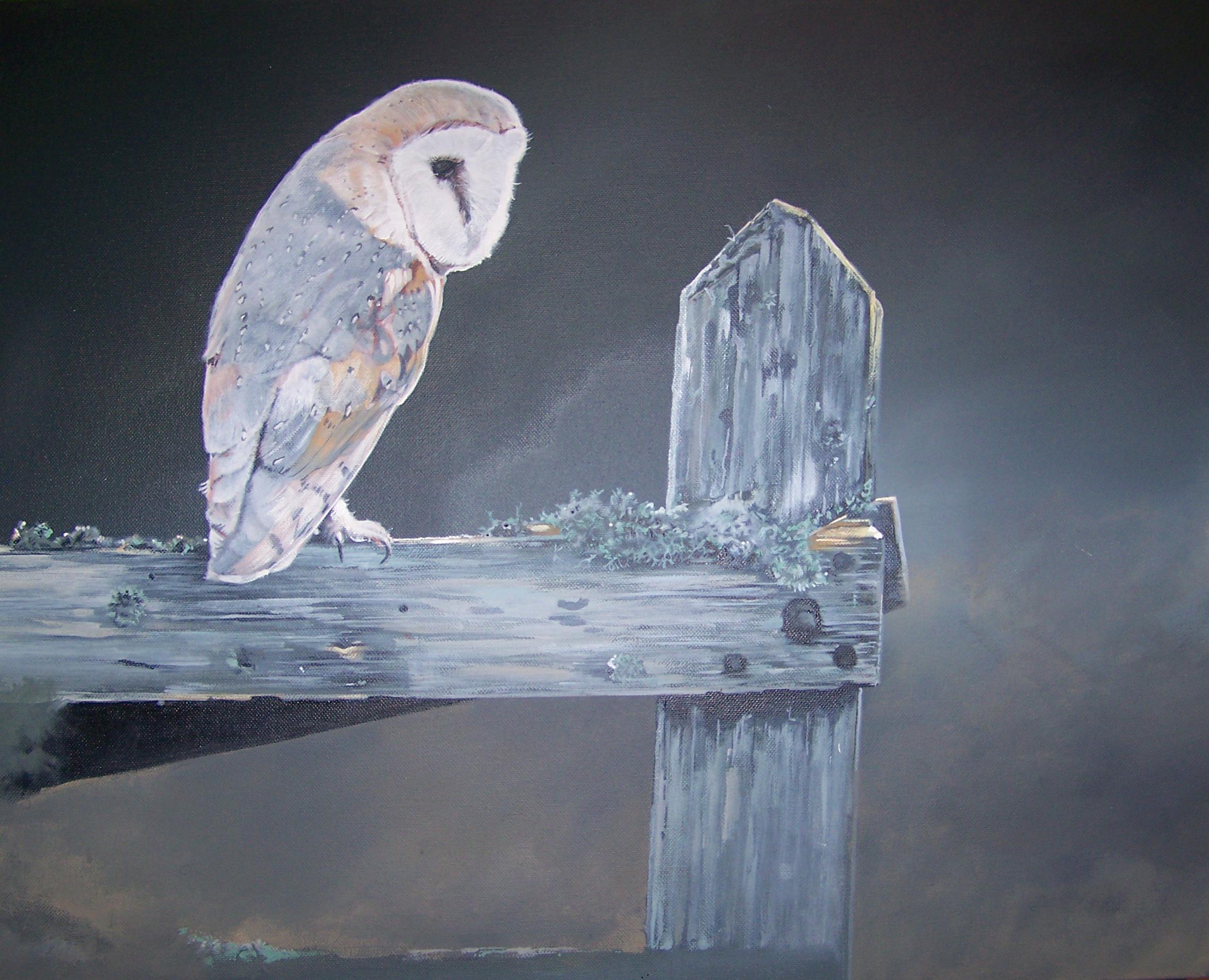 Barn Owl .