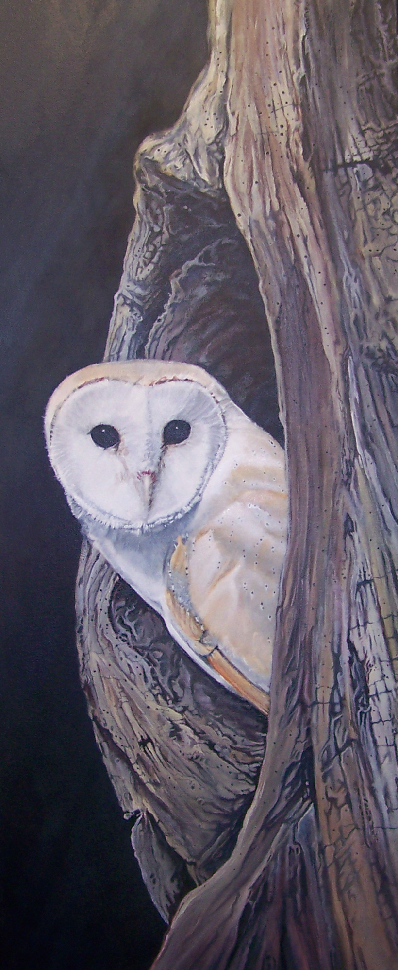 Barn Owl end 1