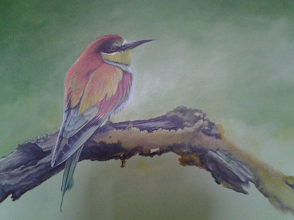 Bird on a branch...Yawn