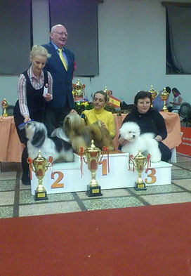 Yackety kennel,Lhasa Apso,puppies,dog shows