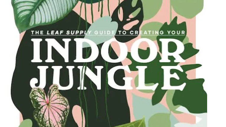 The Leaf Supply Guide to Creating Your Indoor Jungle Book