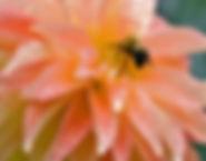 Camano Pet With Bee.jpg