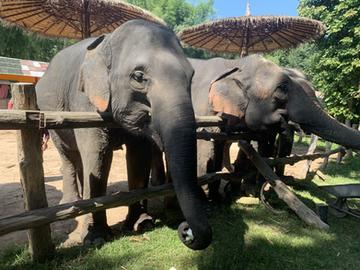 Elephant Sanctuary Thailand 2020