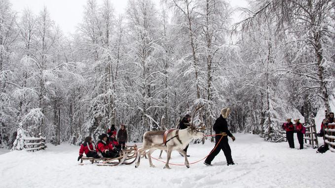 Reindeer Sledge