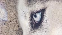 Pets: Companion Souls