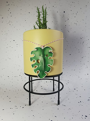 Cheese Plant monstera wooden plant pot decoration