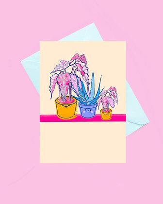 Kawaii plant pot greeting card, aloe Vera plant, elephants ear plant