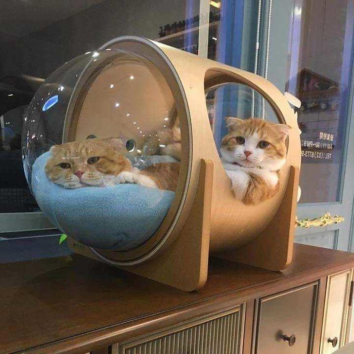 É seguro dizer que a maioria dos gatos ainda prefere sua própria cama bonita e aconchegante.
