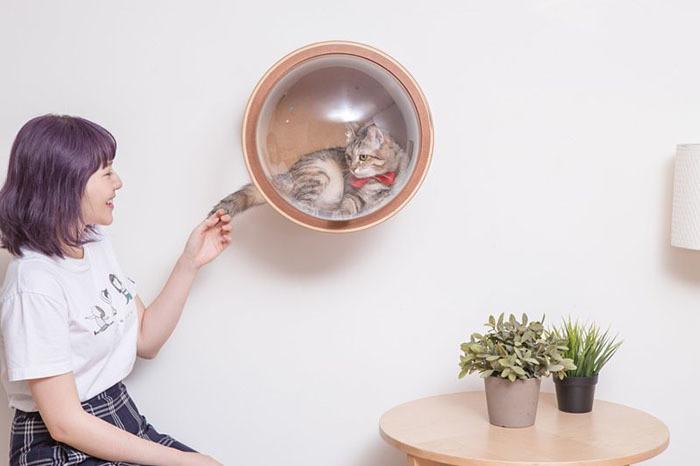 MyZoo Studio lançou uma linha inovadora de camas para gatos que são diferentes de tudo que você já viu. Ela lançou uma linha de cama intergaláctica chamada «The Spaceship Series». Inspirada na forma ideal do corpo da espaçonave, a MyZoo criou três modelos de cama que não só fazem seu animal de estimação parecer um pequeno astronauta, mas também onde tudo é cuidadosamente pensado para seu conforto e comodidade.