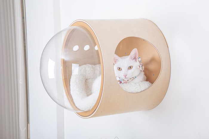 Os gatos sempre encontram um lugar para dormir, não importa o que aconteça. Pode ser um galho de árvore, uma caixa, uma poltrona, um sofá, um tapete, um peitoril de janela, um radiador de aquecimento e até mesmo uma louça ou vaso de flores.