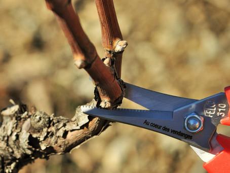 Tailler la vigne et déguster des vieux millésimes