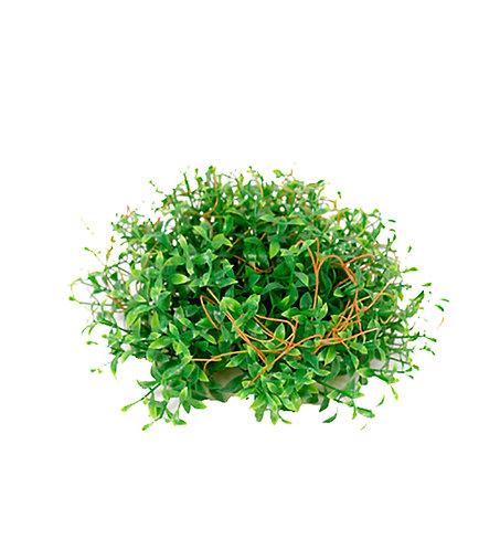 Mr. Plant - Kunstig husvandrer 7cm