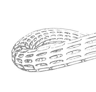 BENTorus  Bracelet Sketch Silver.jpg