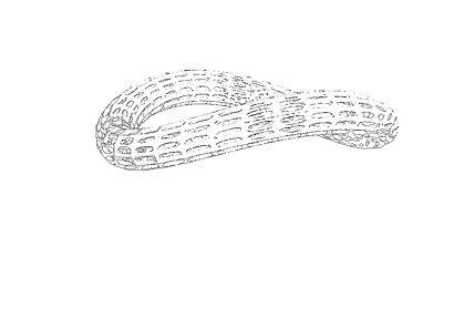 BENTorus  Bracelet Sketch.jpg