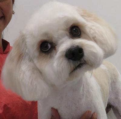 Dog groomer High Wycombe
