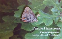 Hairstreak Butterfly - Female