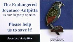 Jocotoco Antpitta