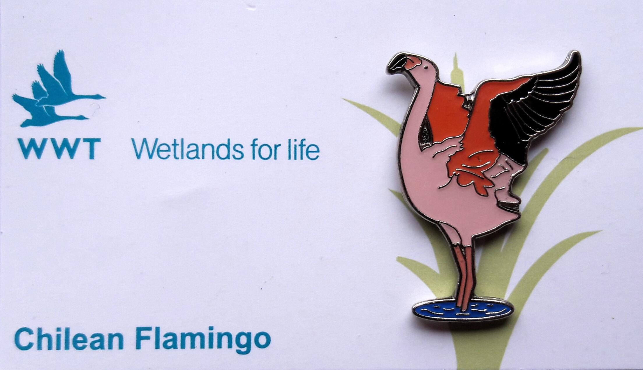 WWT Chilean Flamingo