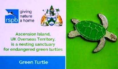 Ascension Island - Green Turtle