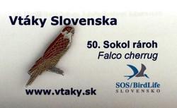 SOS Saker Falcon