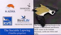 Birdlife - Sociable Lapwing