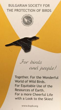 BSPB Pygmy Cormorant