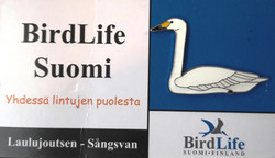 Finland Birdlife Suomi Hooper Swan