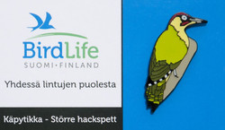 Finland Birdlife Green Woodpecker