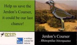 India - Jerdons Courser 2
