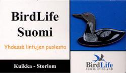 Finland Birdlife Suomi Arctic Loon