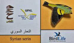 Syrian - Serin