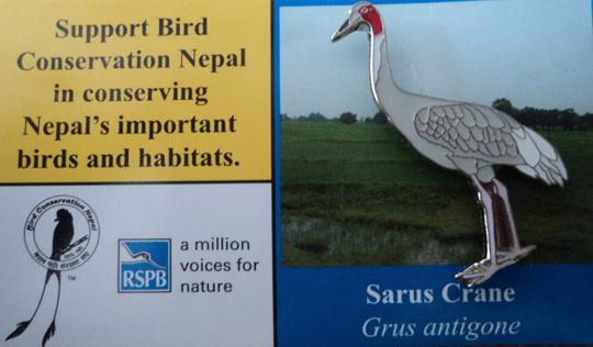 BCN -Sarus Crane