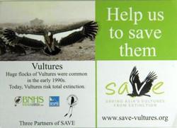 Save Vultures Large