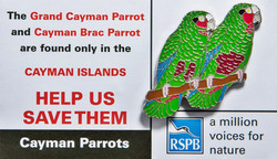 Grand Cayman - Parrot