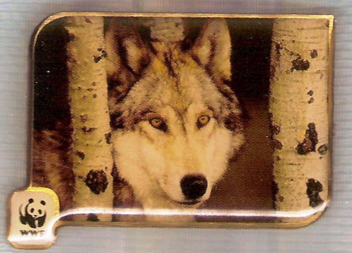 AU GREY WOLF